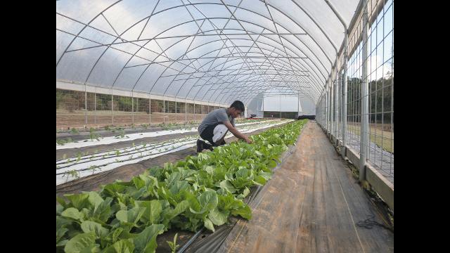 Choctaw Fresh Produce
