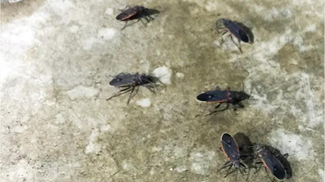 Bug infestation in Palm Springs