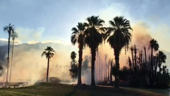 A fire broke out at Mesquite Golf & Country Club, burning trees and vegetation, early Friday evening.