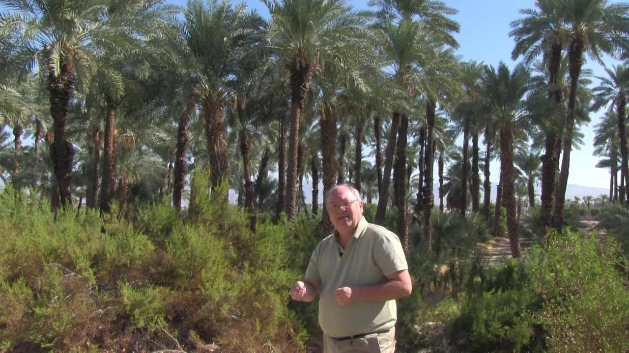 explore the coachella valley shields date garden in the palm springs area - Shields Date Garden