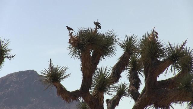 Explore the Coachella Valley: Joshua Tree National Park