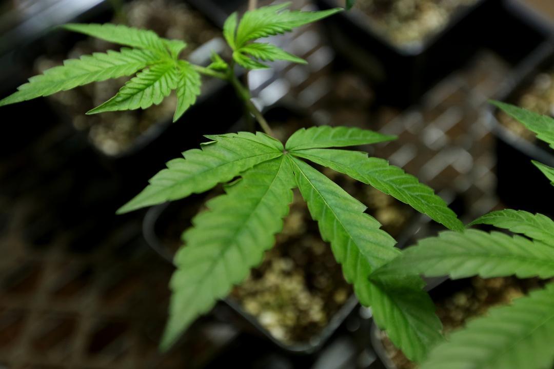 VIDEO: Cannabis on the Oregon Coast