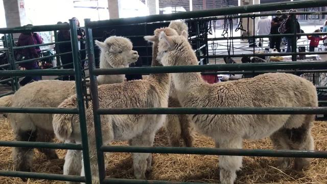 Learn all about the world of agriculture at Oregon Ag Fest, with activities including a petting zoo, pony rides and Ag Country.