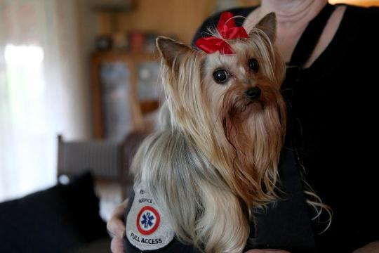 Eleanor Miller, 77, of Salem, lives with a heart condition that her 8-year-old Yorkshire terrier, Fiona, senses and warns her of before symptoms can be felt.