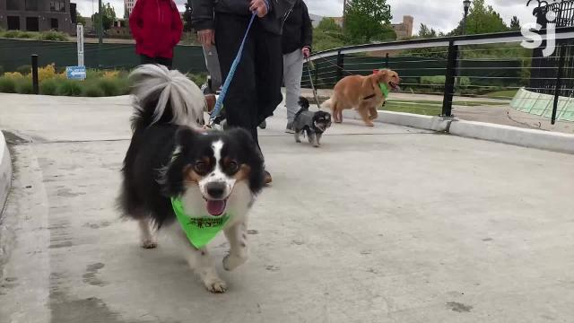 Nearly 500 people attend the 2018 WIllaMutt Strut, bringing dogs of all ages and breeds to Riverfront Park for the seventh annual event.