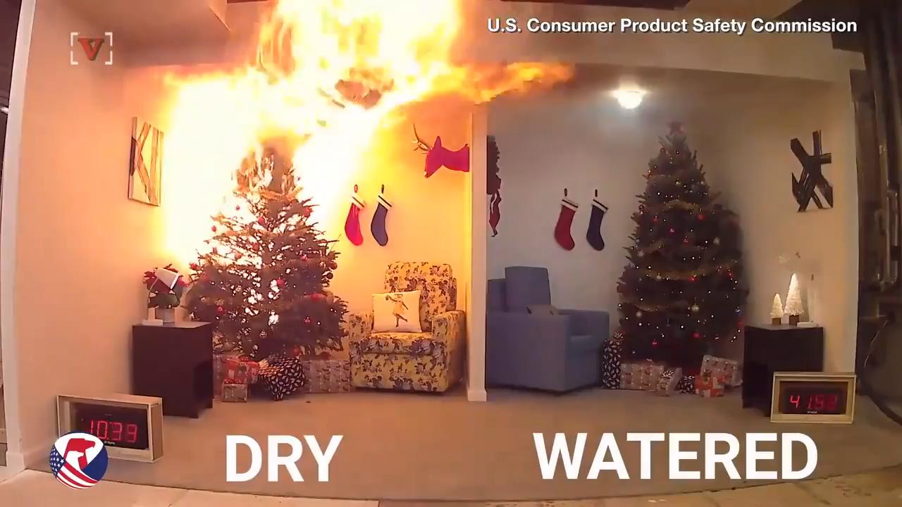 Watch it: The scary consequences of neglecting to water your Christmas tree