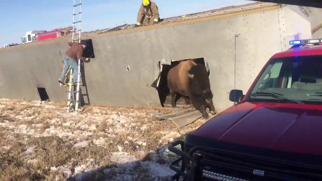 Fire department rescues bison