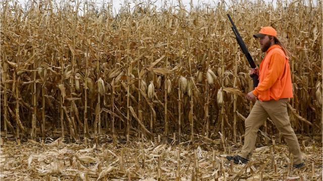 Inside pheasant season in South Dakota.