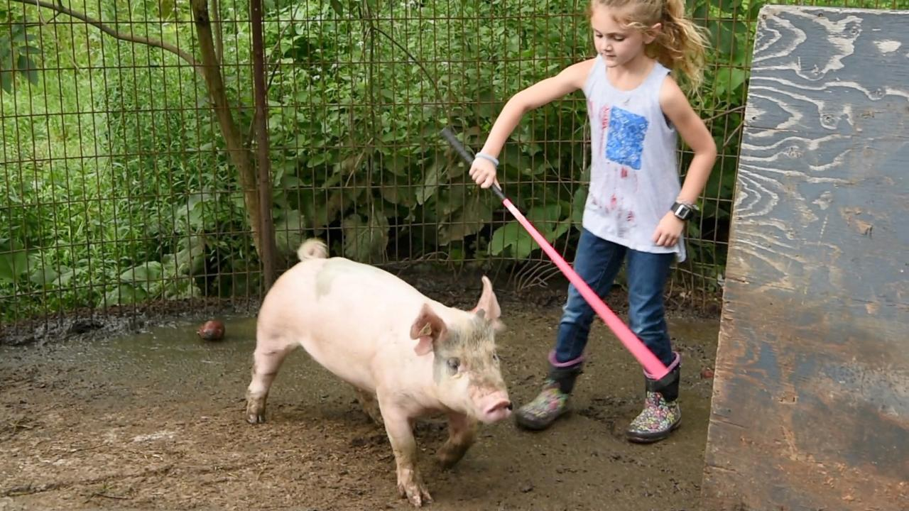 Patrick Streib, a former 4-H participant and now 4-H leader of the hog handling club, is busy teaching his daughters how to handle pigs.