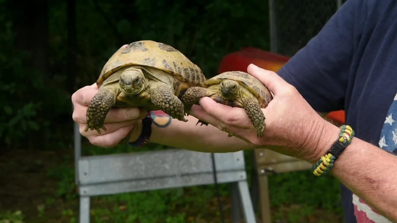 Scott McGillicuddy is a former wildlife rehabilitator who is currently working to be re-certified. His passion is caring for turtles and tortoises.