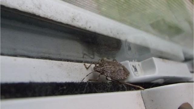 Five tips for how to prevent stink bugs from entering your home, and how to dispose of them.