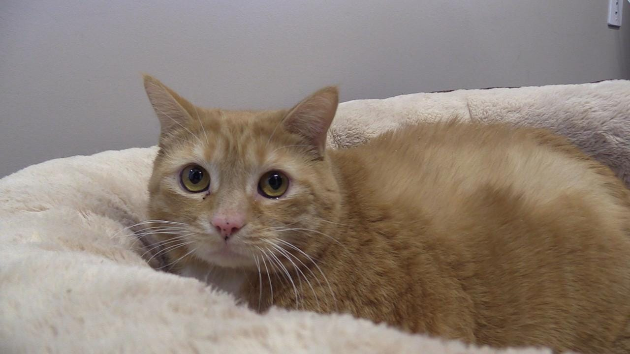 DCSPCA consulting director of animal care, Stacey Coleman tells us about Bertha who is a 4-year-old spayed cat up for adoption.