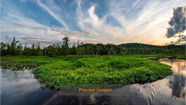 Video: The Great Swamp through the seasons