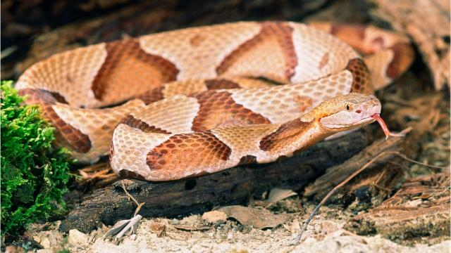 Video: Venomous snake spotted in Ulster County.
