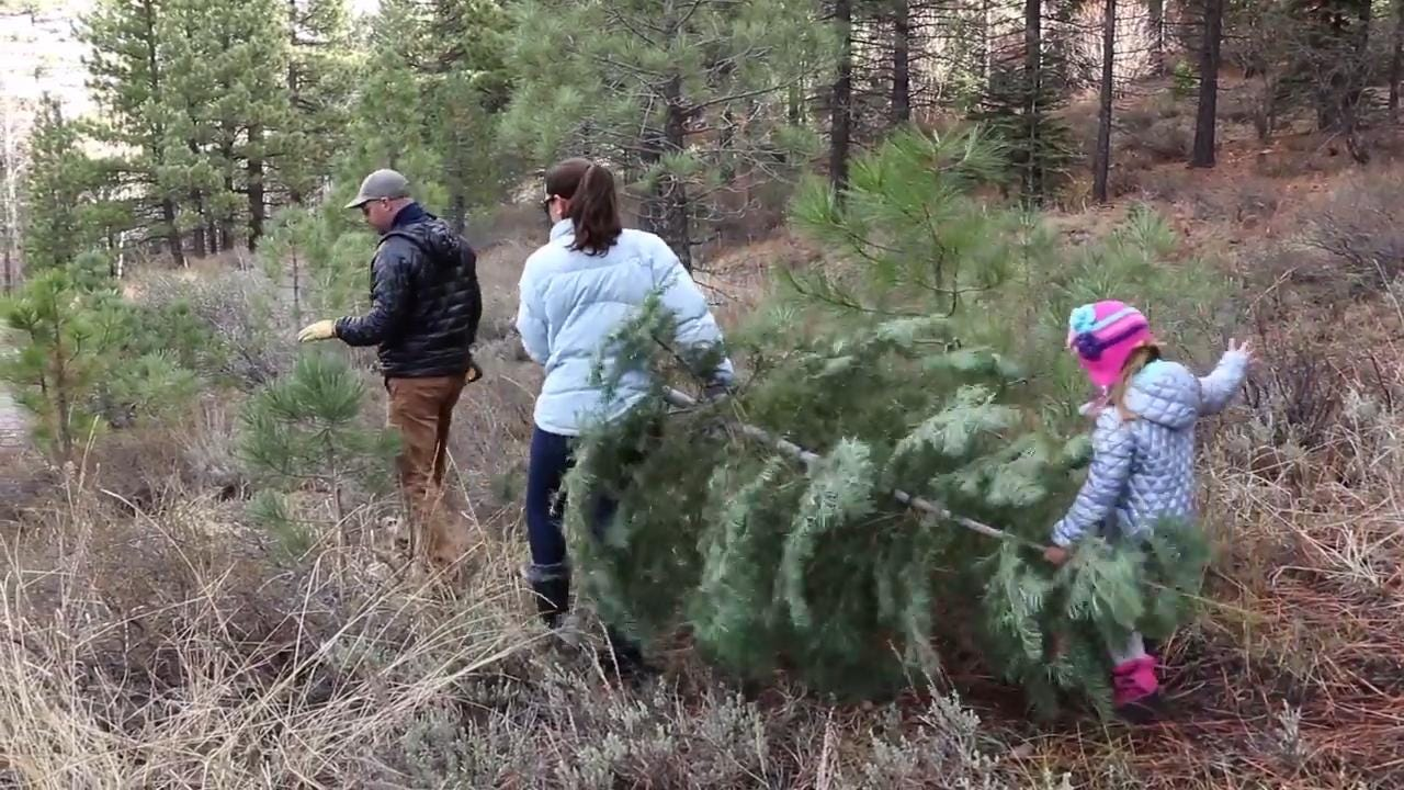 See how to properly and safely find a Christmas Tree on public lands.