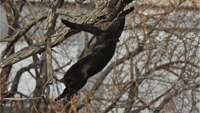 A cat fell from a tree into the Truckee River after a botched amateur rescue attempt.