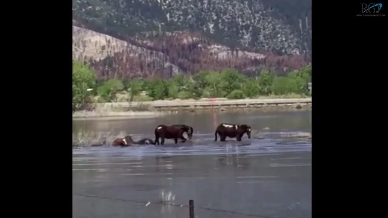 The horses were caught bathing in the lake by Holly Hagen.