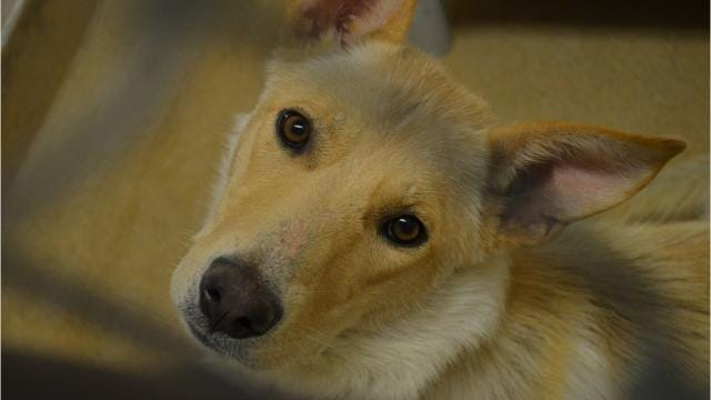Meet some of the doggies at TCHS: Aug. 17, 2017