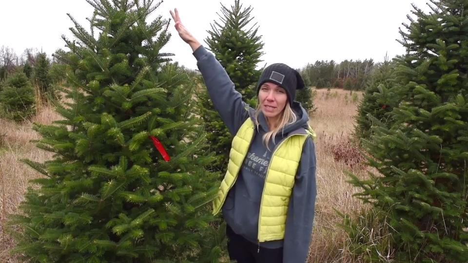 Cut Your Own Christmas Tree.Hinkemeyer Tree Farm