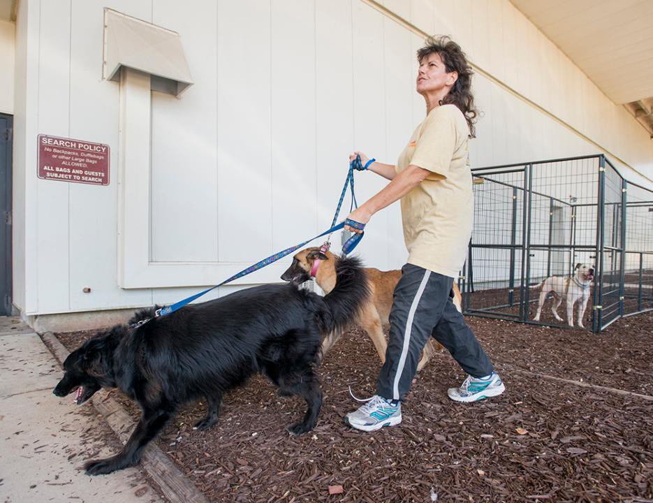 There's no excuse': West Palm Beach woman brings her 11 dogs