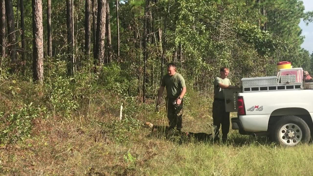 A team of dogs and handlers with Okaloosa Correctional Institution completed a mock missing person search in Blackwater River State Forest Wednesday, Sept. 20.