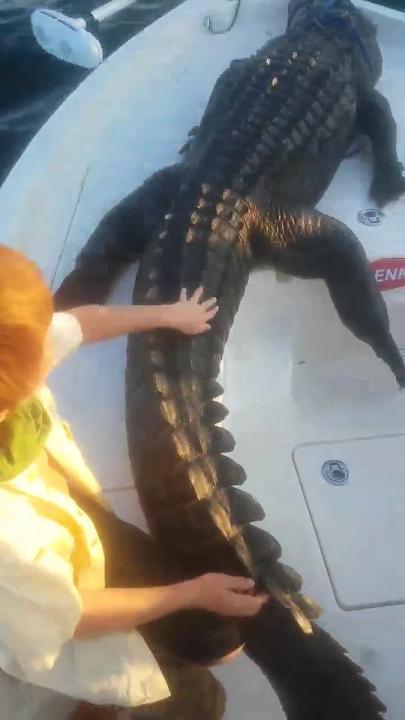 Gator rides to Gulf Breeze