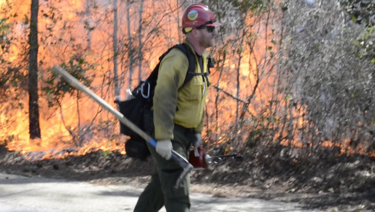 Watch forestry technicians set fires as Park Ranger Brent Everitt talks about the controlled burn in the woods near the Gulf Islands National Seashore Headquarters in Gulf Breeze on Thursday, March 8, 2018.