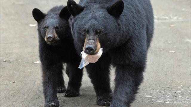 Here are 5 ways to deal with bear problems
