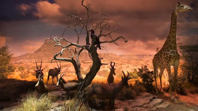 First look: Scenes from the wildlife galleries at Wonders of Wildlife