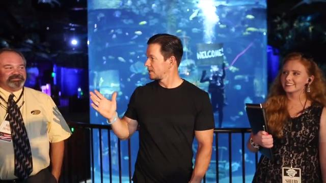 Actor Mark Wahlberg dives in one of the tanks at the Wonders of Wildlife National Museum and Aquarium.