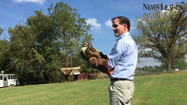 Dan Ashe, director of the U.S. Fish and Wildlife Service, releases a rehabilitated great horned owl at Dickerson Park Zoo in Springfield on Sept. 21, 2017.