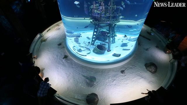 WOW visitors impressed with museum and aquarium