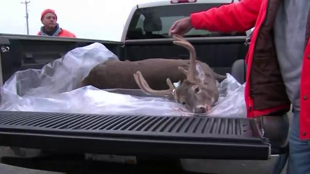 If you hit a deer with your car, there is a way you can legally take it home and eat it, KOLR reports.