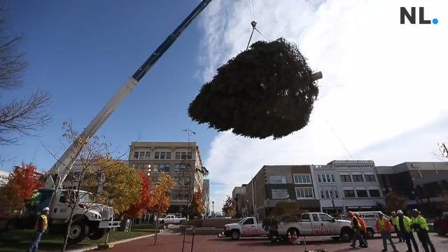 The Springfield Public Works department installed a 30-foot blue spruce Christmas Tree on the Square on Wednesday morning.