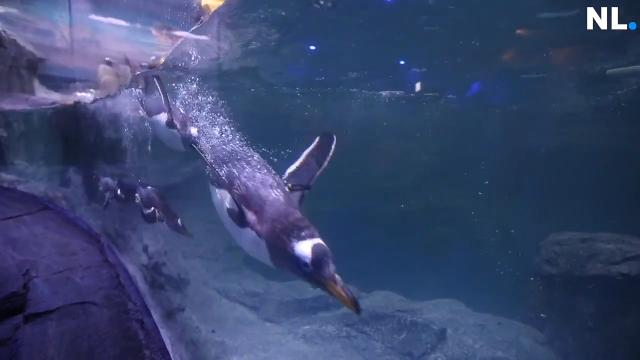 A new penguin exhibit was unveiled at the Wonders of Wildlife Museum and Aquarium.