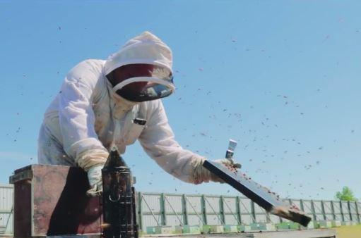 Doug Hauke, CEO of Marshfield's Hauke Honey Corporation, takes viewers inside his state-of-the-art beekeeping facility. Hauke maintains large beekeeping operations in Wisconsin, California and Texas, and grows California almonds.