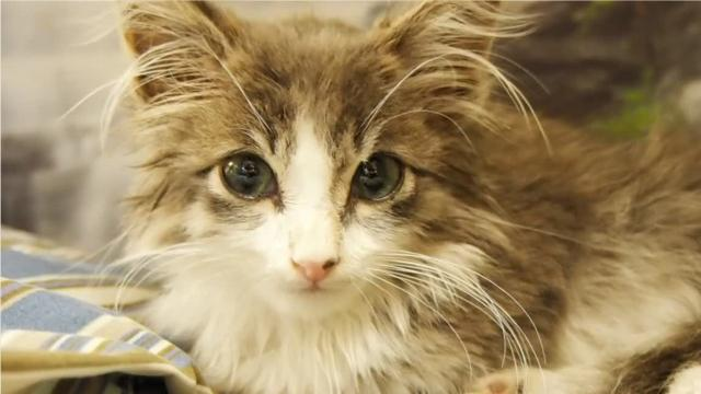 Purrito, the Taco Bell kitten, was struck by a truck outside Taco Bell on East Johnson Street in Fond du Lac. He survived, but will need his back leg amputated. The Fond du Lac Humane Society is seeking donations to help fund the approximately $1,000 vet bill. (Taima Kern/USA TODAY NETWORK-Wisconsin)