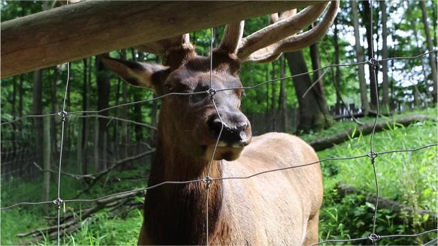 Wisconsin's wildest zoo