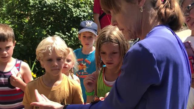 The Shorewood Monarch Project has inspired Shorewood residents to raise and release 570 Monarch butterflies throughout the village.