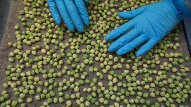 Salmonella linked to shelled peas from farmers' market sickens four in Brown County