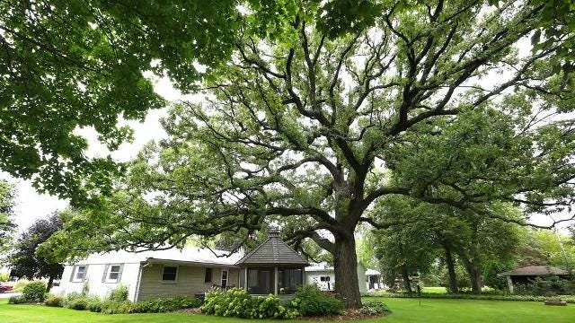 Fond du Lac trees are point of pride for residents