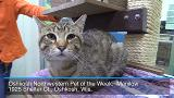 Oshkosh Northwestern Pet of the Week:  Adopt Manilow