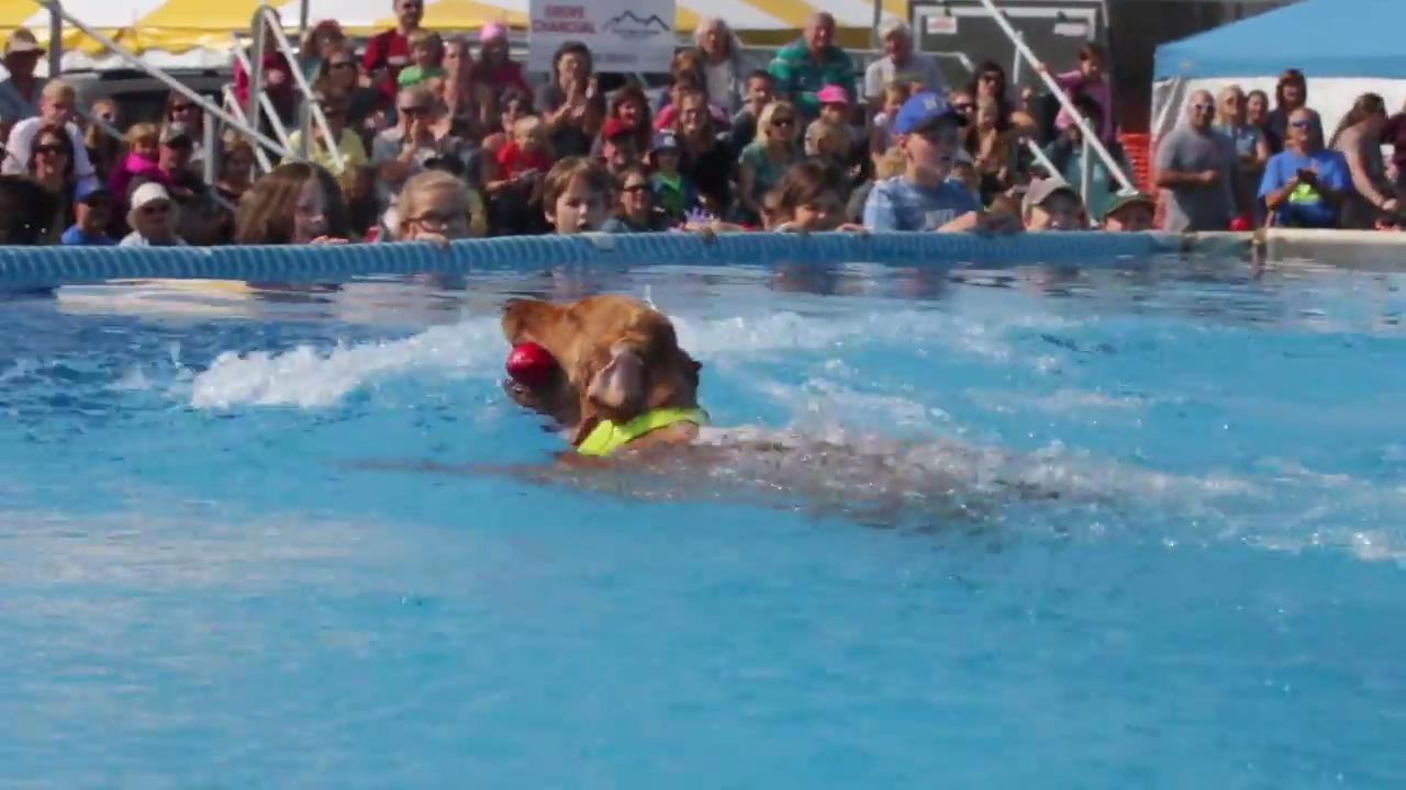The Dock Dog organization brought their national show to the Sheboygan County Fair. People from around Sheboygan County and the midwest brought their dogs to see if they can jump off a dock with the best of them.