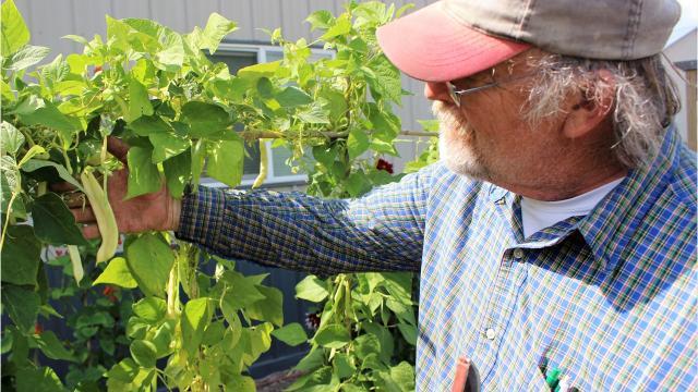 Vietnam veteran Don Guzan has found gardening therapeutic. Guzan grows unique varieties of heirloom crops from around the world at his rural Plymouth garden.