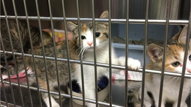When a house was slated for demolition in August, the Door County Humane Society went into action to rescue 40 cats and kittens. The felines have completed their vaccinations and have been spayed or neutered.