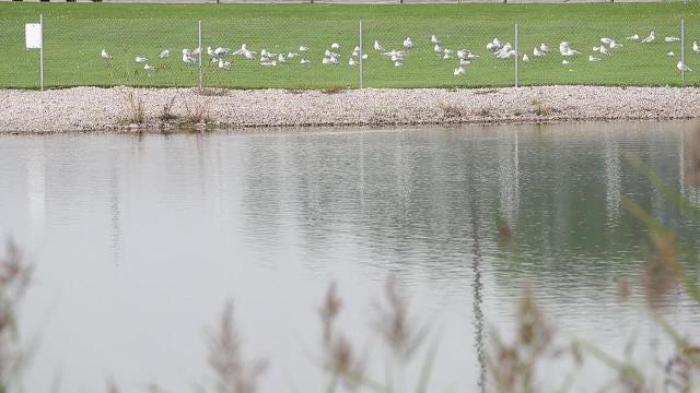 Pulaski High School students are raising fish