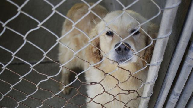Previous kennel searches failed to reveal reported dead dogs