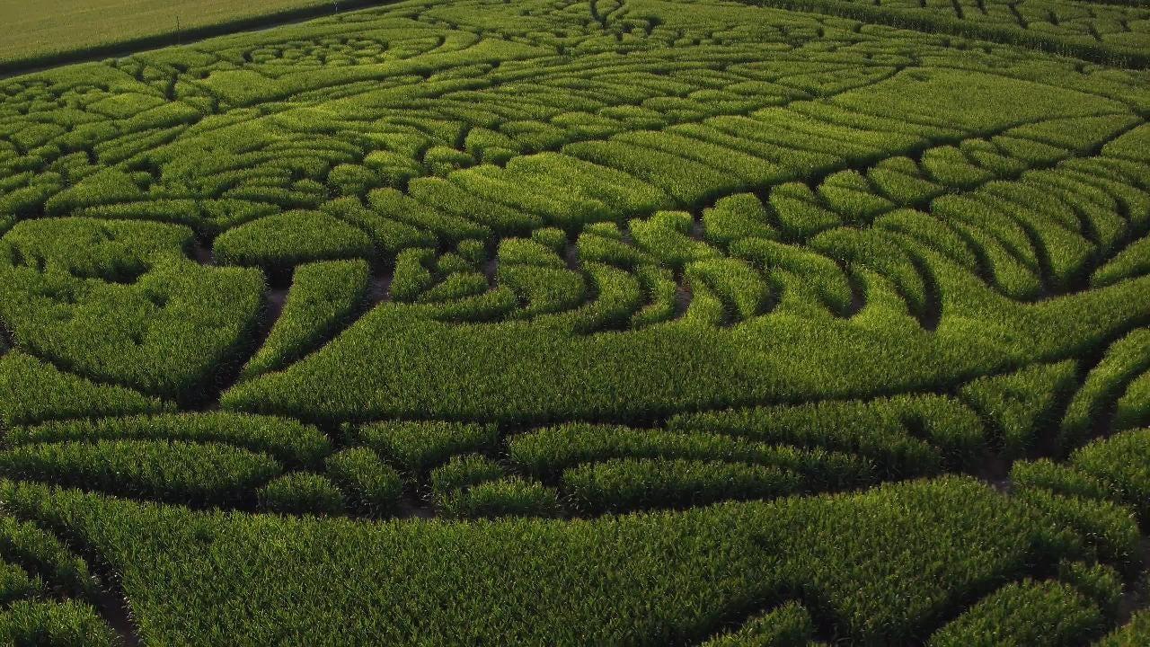 Trilobite, corn maze