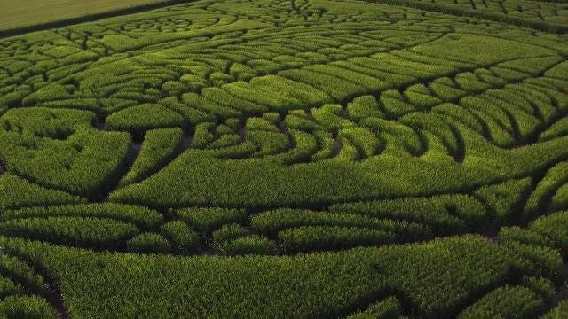 Treinen Farm Corn Maze in Lodi features Wisconsin's state fossil, the trendy trilobite