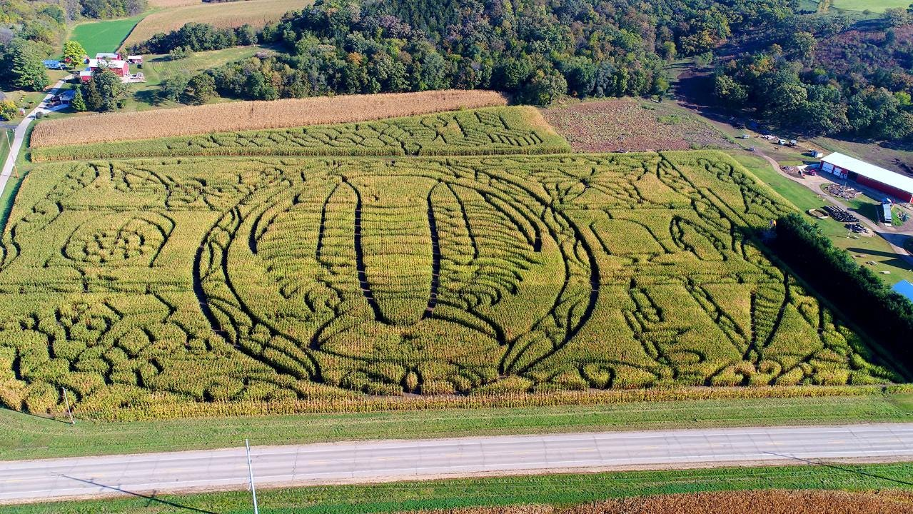 Drone footage of a fossil-shaped corn maze